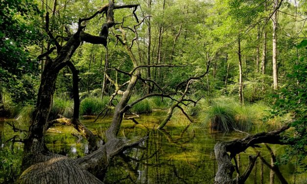 INFO : Danger en Forêt – arbres morts